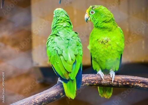 Aluminium Papegaai parrot