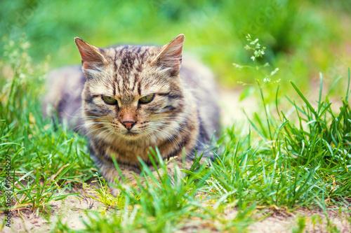 Portret kota lying on the beach w trawie w ogródzie w lecie