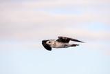 Seagull Water Bird Animal - 195452480