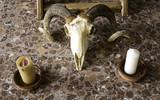 Indian goat skull - 195462293