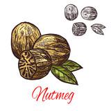 Nutmeg seasoning nut spice vector sketch icon - 195474650