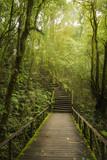 Walkway into the woods.
