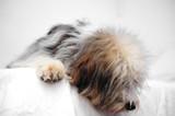 perro cuidado - 195514277