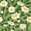 A daisy flower on a background of green leaves. Seamless pattern. Vector illustration. - 195521438