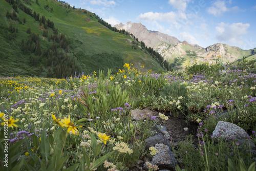 Fotobehang Khaki Wildflower Mountain Meadow - Albion Basin Utah
