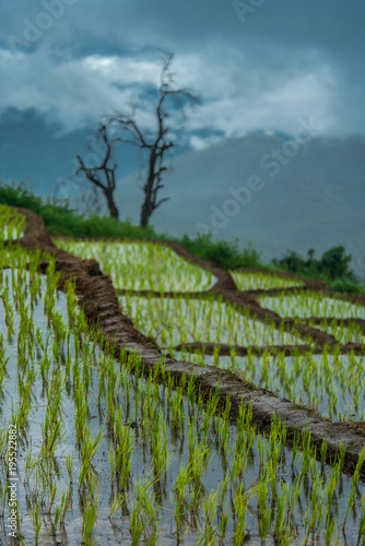 Deurstickers Rijstvelden Mountain Rice Field