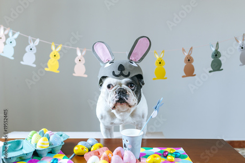 Foto op Plexiglas Franse bulldog Dog with rabbit hat on table full of Easter eggs