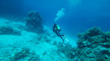 Diver at the red Sea between the corals - 195530437