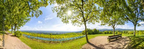 Foto op Aluminium Wijngaard Bank mit Ausblick über den Rheingau bei Kiedrich