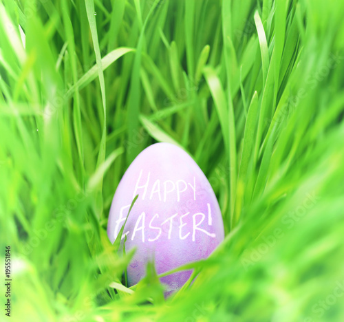 Hidden Easter egg in green grass - 195551846