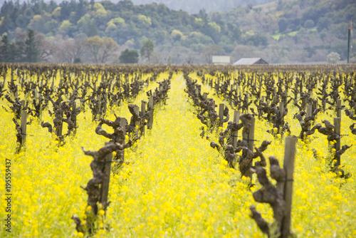 Sticker Napa Valley mustard fields