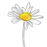 vector drawing flower of daisy - 195583281