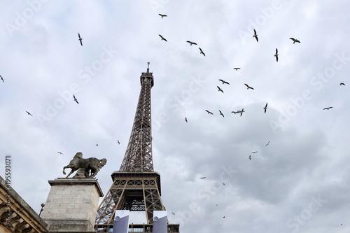Poster Parijs Birds near the Eiffel Tower