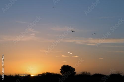 Foto op Aluminium Ochtendgloren Dawn and |Birds