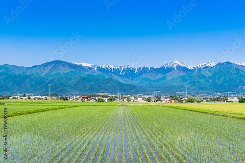 春の信州 安曇野の田園風景と北アルプス