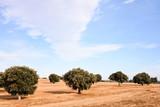 European natural countryside - 195609485
