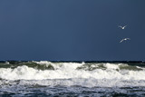 Two white seagulls flying over the Baltic Sea during strong wind - 195612023