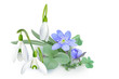 Bunch of Forest flowers, messengers of spring - Background.