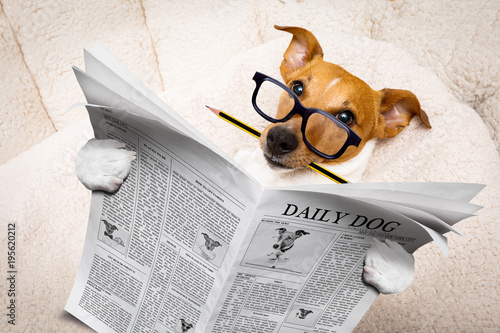 Staande foto Crazy dog dog reading newspaper