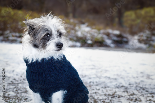 Staande foto Crazy dog freezing icy dog in snow