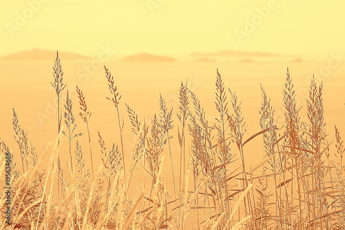 Aluminium Zwavel geel autumnal background beach / dry yellow grass by the sea, landscape background with islands in the sea