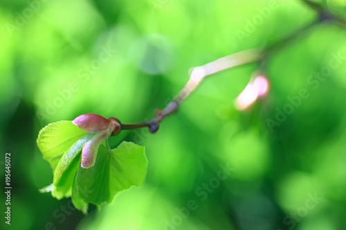 spring greens background, abstract blurred nature beautiful pictures, green shoots - 195645072