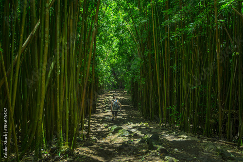 Fotobehang Bamboe Hiking trough the Bamboo Forest in Maui