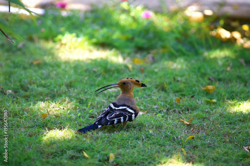 Poster Gras Bird on the grass in the tropics