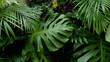 Leinwandbild Motiv Green tropical leaves Monstera, palm, fern and ornamental plants backdrop background