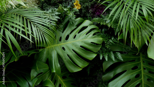 Green tropical leaves Monstera, palm, fern and ornamental plants backdrop background © Venus