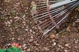 Fotografía de un rastrillo oxidado en el huerto de casa. - 195656237