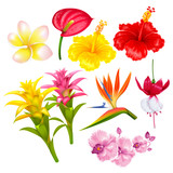 Tropical exotic flowers set - 195660403