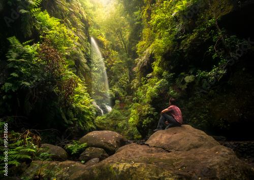 Cascada - bosque de Los Tilos - 195678606