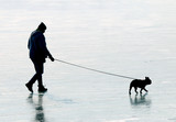 Young man with his pug dog walking on frozen lake together. Leisure activities and sports in wintertime. - 195680423