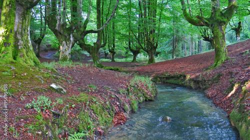 Tuinposter Weg in bos En el silencio del bosque