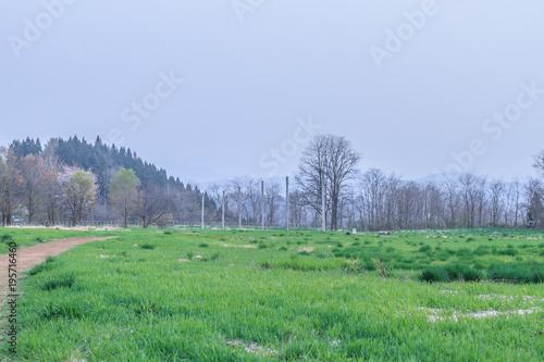 Foto op Canvas Olijf 春の大湯環状列石の風景