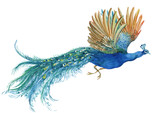 peacock watercolor illustration - 195726213