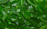 Creative layout made of green leaves. - 195731866