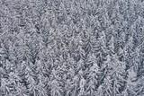 Verschneiter Nadelwald