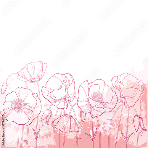 Vector elegance background with outline Poppy flower, bud and leaves in pastel pink colors. Ornate poppies for summer design in contour style. Symbol of Remembrance Day.