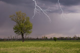 lightning falling near a solitary tree in the middle of the field - 195777868