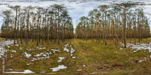 Fototapeta Walking trial in the forest - panorama 360. Poland 2013
