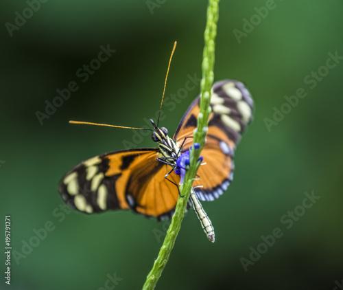 Fotobehang Vlinder Butterfly Looking
