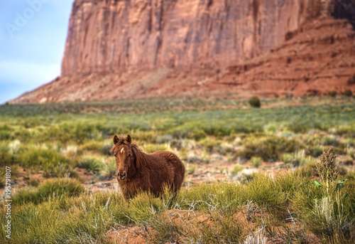 Fotobehang Paarden Monument Valley Horse