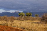 Tsavo West National Park in Kenya