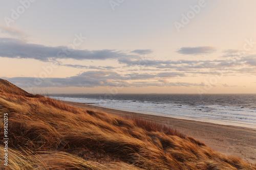 Fotobehang Strand Gras Dünen im Abendlicht