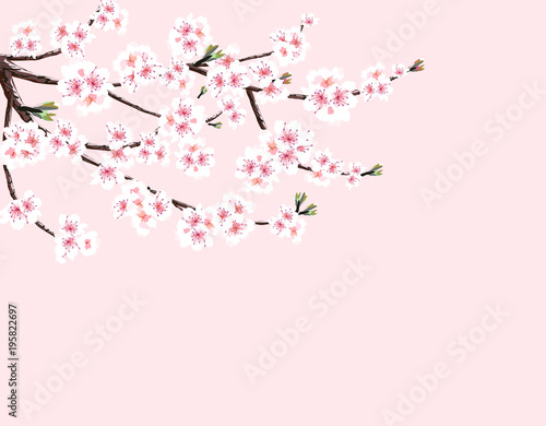 Fototapeta Sakura. Cherry branch with white flowers. Isolated on a pink background. illustration