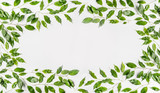 Pretty Frame made of green branches and leaves on white background. Flat lay, top view, horizontal, banner - 195830467