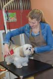 salon for pets