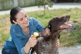 female vet stroking dog at animal shelter - 195834078